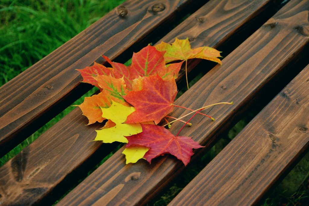 Fall foliage by Condesign. Courtesy of Pixabay. CC0 Public Domain