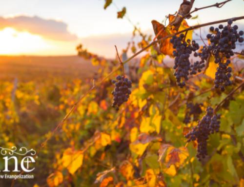 A Generous Vineyard Owner